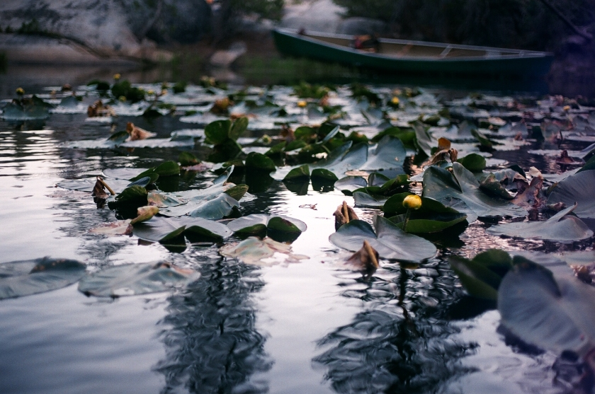 Cramped Up Utica Reservoir lily pads