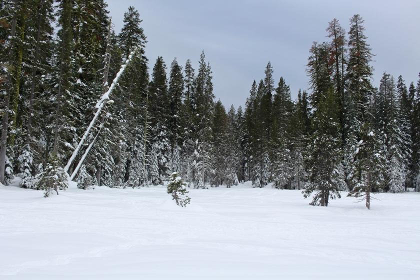 Cramped Up snowshoe meadow