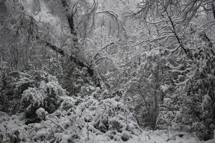 cramped up big sur pat springs woods snow