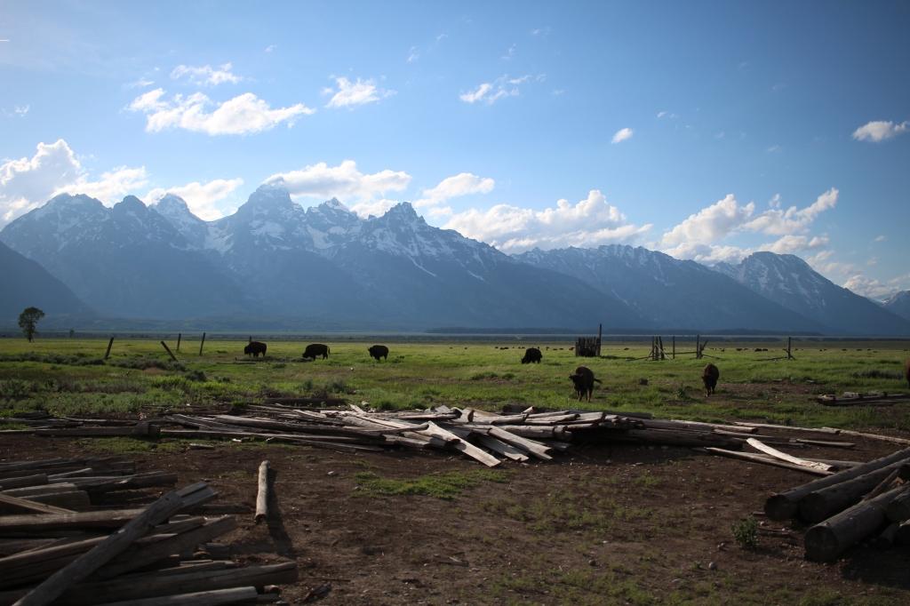 cramped up road trip grand tetons mountain buffalo